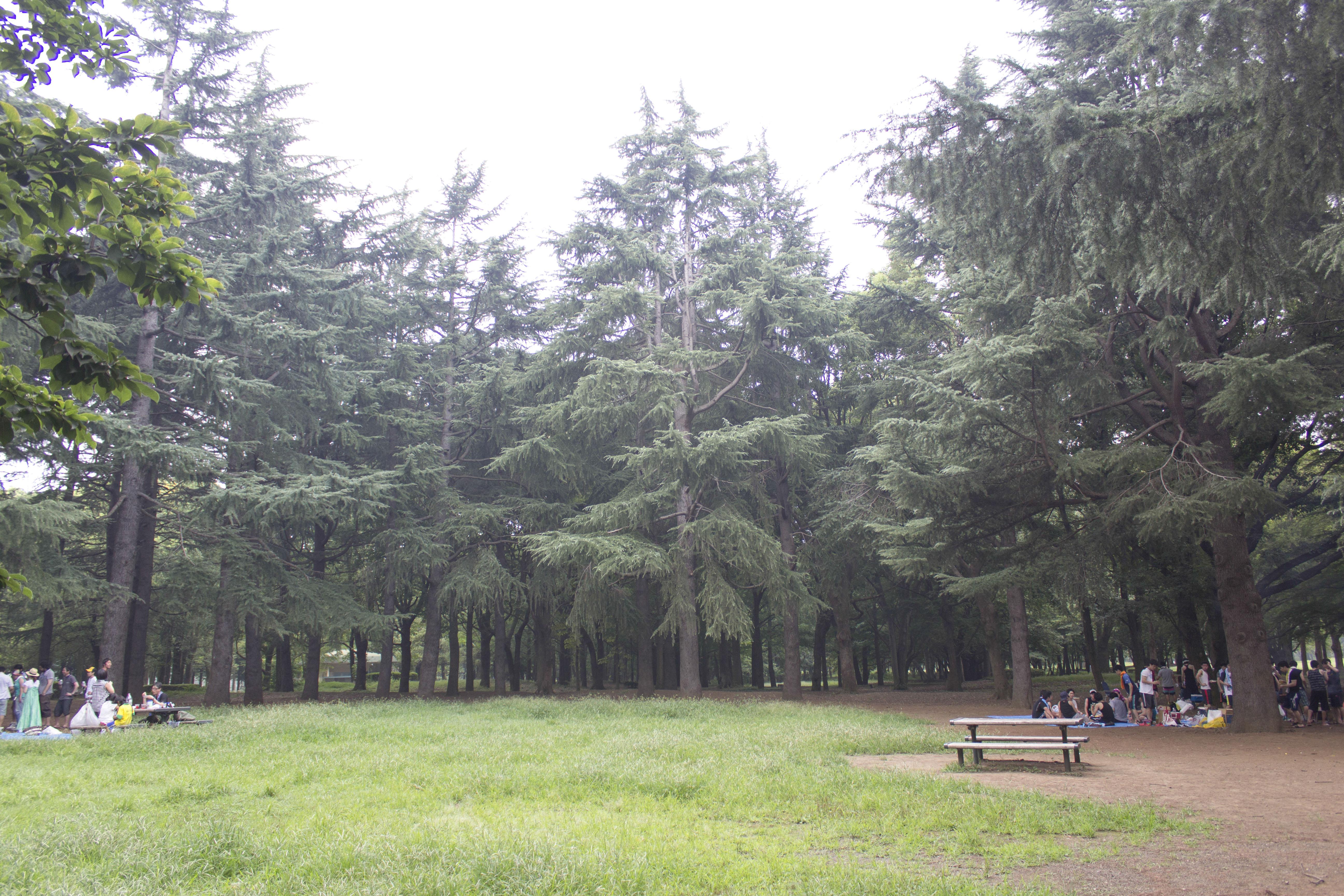野川公園2