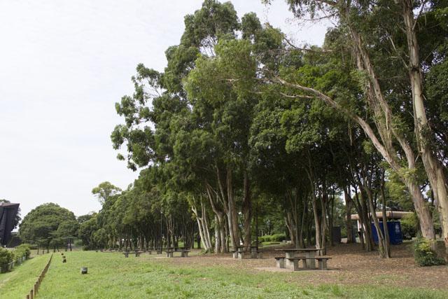 夢の島公園1